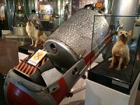 Space dogs in Moscow