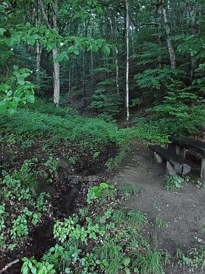 a bench in the shade of the forest