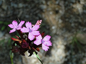 pink flower in the forest