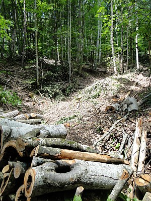 trail with timber
