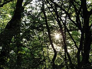 sun through tree canopy