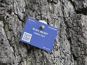 Black walnut label with QR code