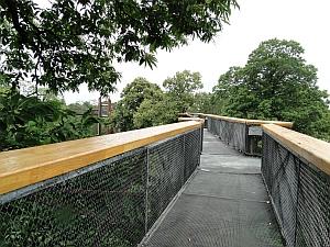 Kew Treetop Walkway