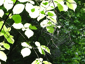 spider web in sunshine